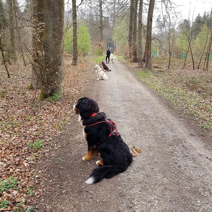 Lernspaziergänge © Hundeschule gooddog