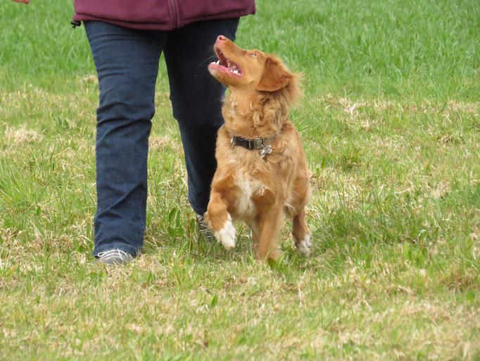 Freifolge © Hundeschule gooddog