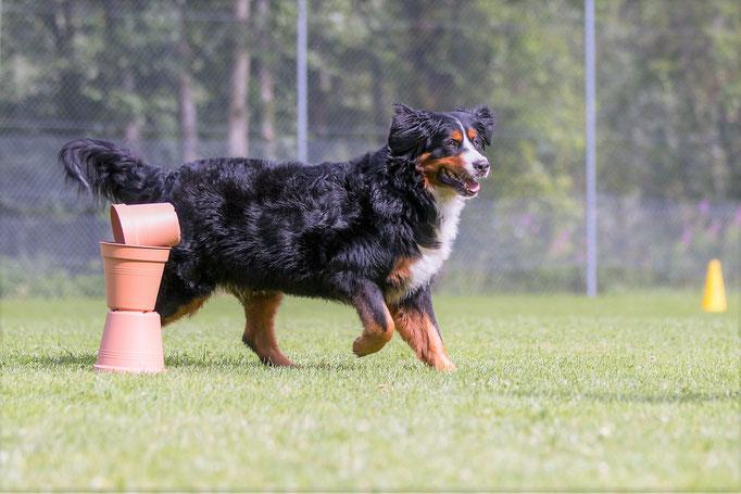 SpassSport © Hundeschule gooddog