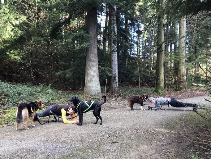 Dog Bootcamp © Hundeschule gooddog