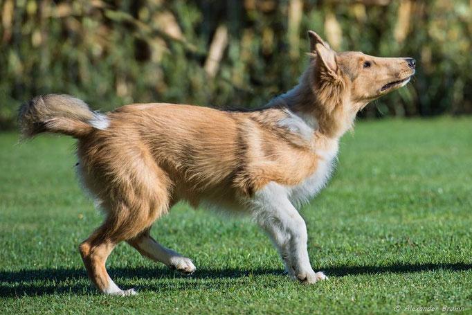Junghundekurs © Hundeschule gooddog