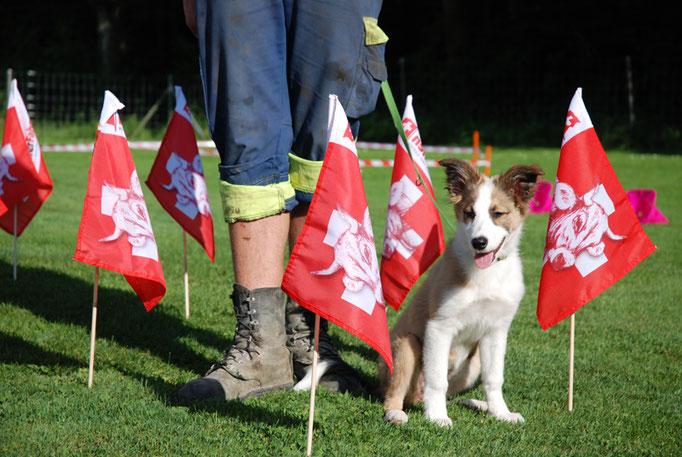 Border Collie in der Welpenschule © Hundeschule gooddog
