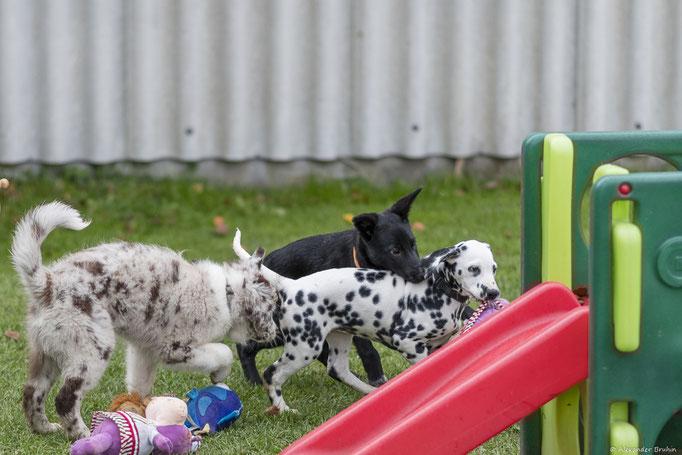 Welpenförderung © Hundeschule gooddog