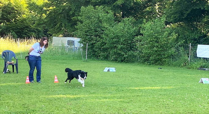 Begleithund/Obedience © Hundeschule gooddog