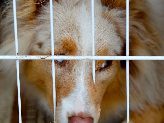 © Hundeschule gooddog