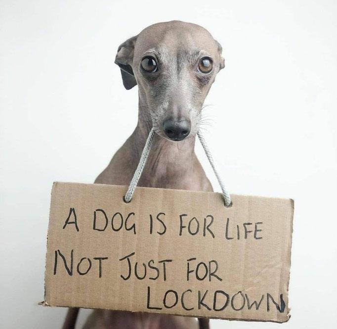(c) gooddog-Theoriekurs für Hundehalter
