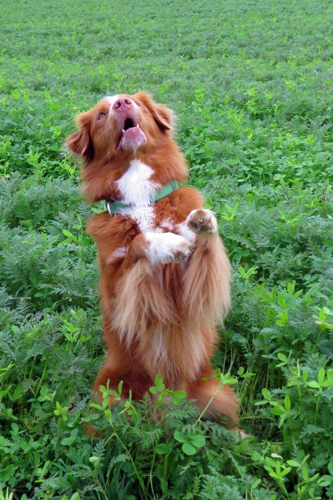 Kreuz und Quer © Hundeschule gooddog