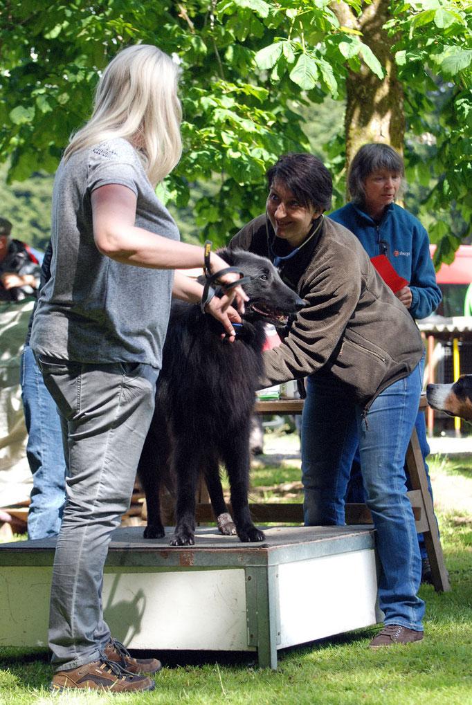 Ringtraining @ Hundeschule gooddog
