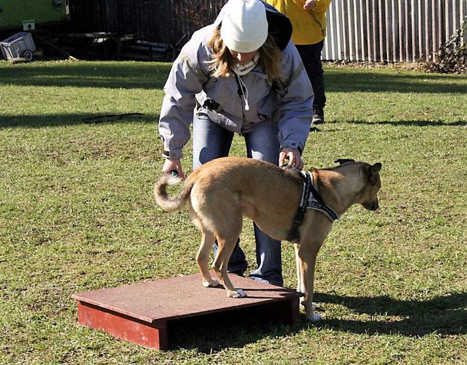 Clicker-Training © Hundeschule gooddog