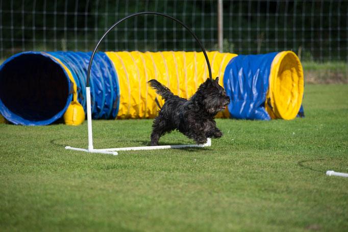 Hoopers/Hoop-Agi/Nadac © Hundeschule gooddog