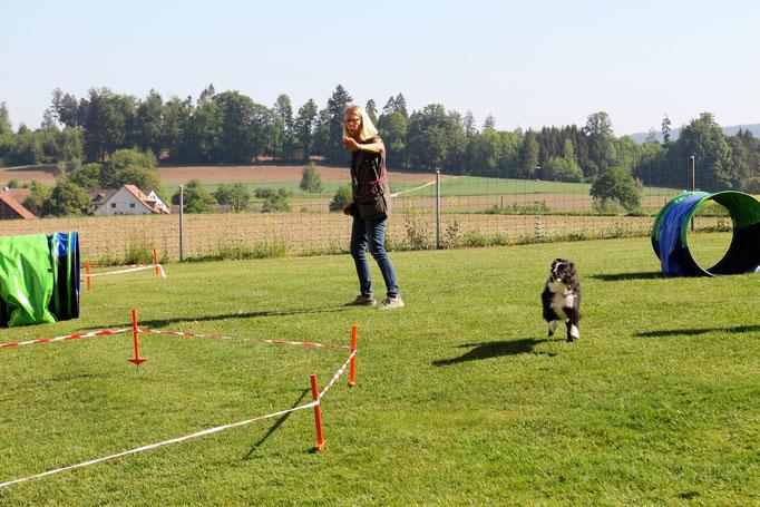 Longierkurs © Hundeschule gooddog