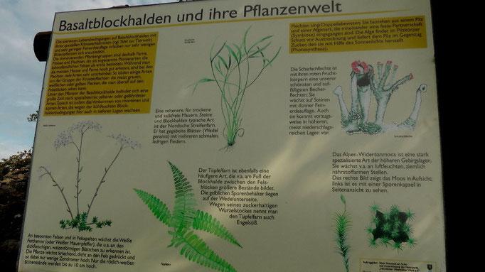 Basaltblockhalde und ihre Pflanzenwalt
