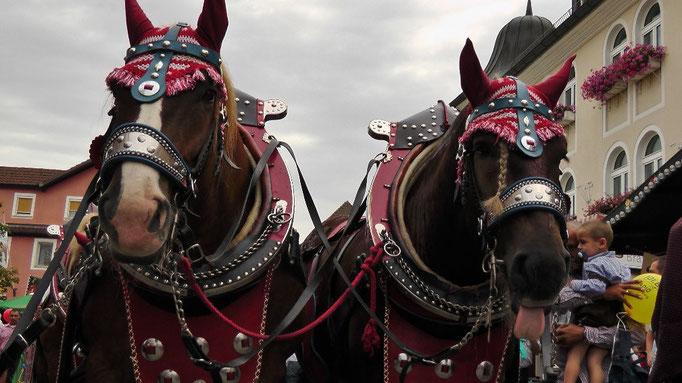 Man achte auf das rechte Pferd :) was will es wohl dem Fotogarfen sagen?