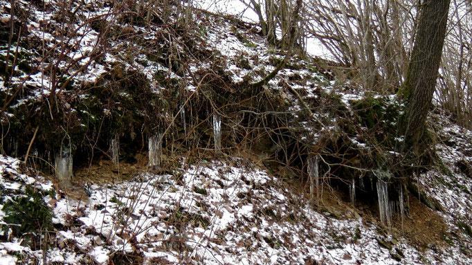 Am Wegesrand entdeckt zur Entenmühle vom Sonntag den 13.01.2013