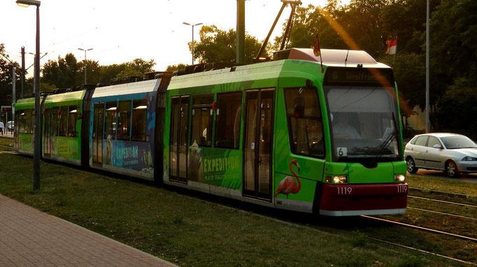 Straßenbahn hält im Bereich Eingang Bayernstraße