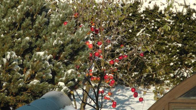 Der erste Schnee kam schon im Herbst das Foto vom Montag den 29.10.2012 nachts um -10°C
