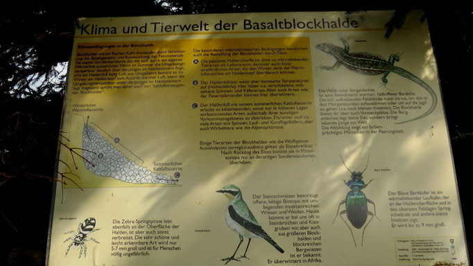 Tierwelt der Basaltblockhalde