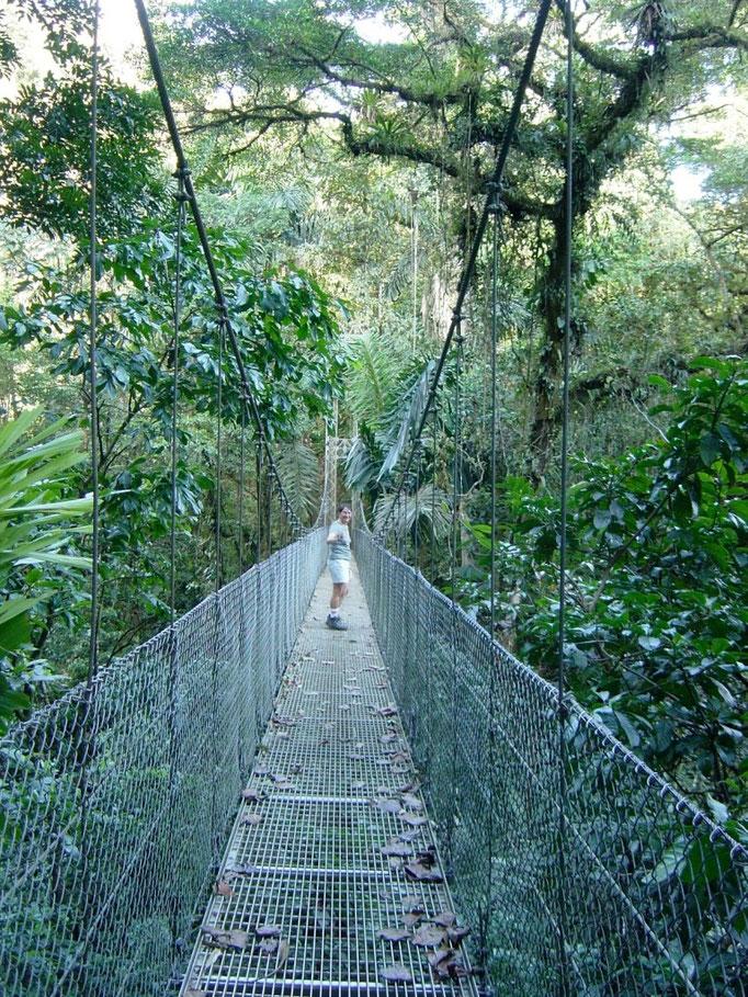 Eine von hunderten von Hängebrücken im Regenwald