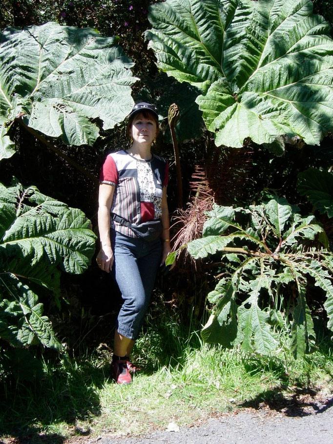 Naturpark des Poas Vulkanes ( Regenschime der armen Leute)