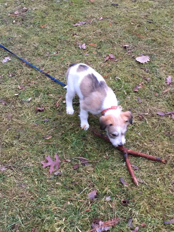 Cataleya hat auch einen Stock gefunden.
