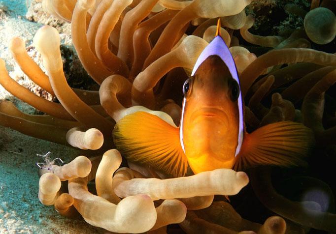 Nemo and Shrimp