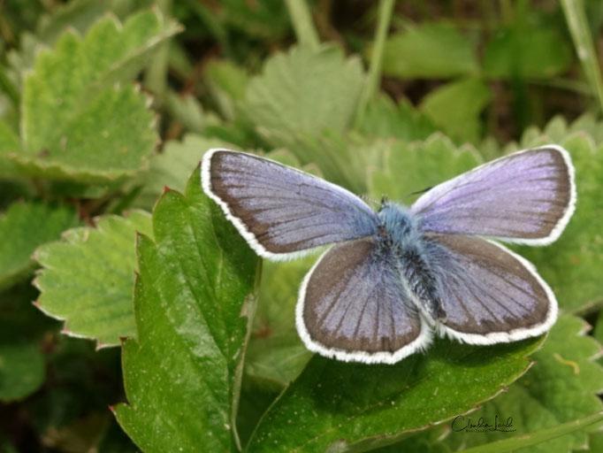 ....es ist erst der Anfang sagte der Schmetterling...
