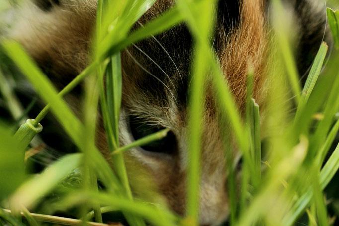 Versteckt im Gras, 4 Wochen alt