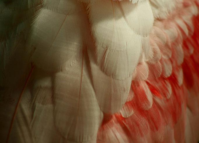 Details in Rosa, Papiliorama