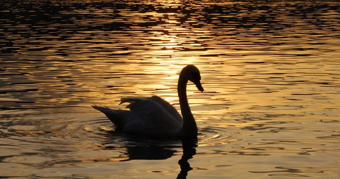 Sunset am Greifensee