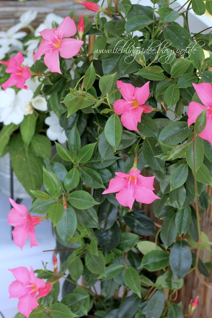 Mediterrane Gartendekoration, unsere neue Palettenlounge aus Palettensofas und ein schnelles Eistee-Rezept