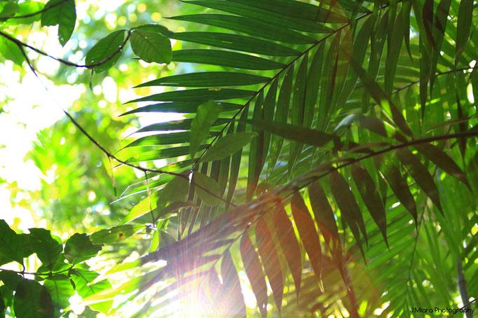 Le vert incroyable du Costa Rica, MONTEVERDE