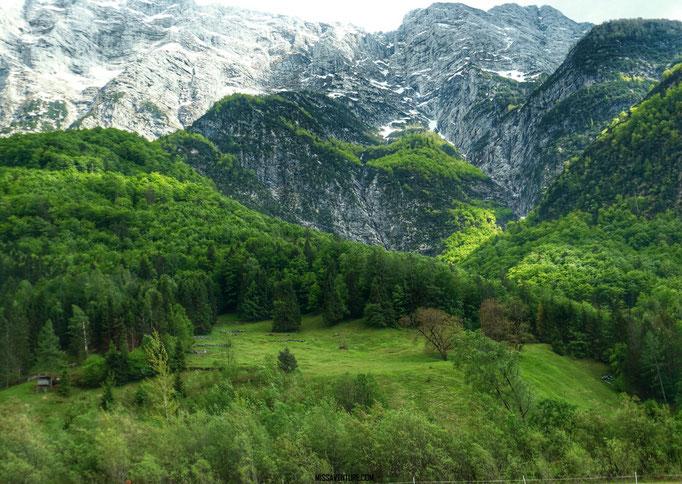 Log Pod Mangartom.