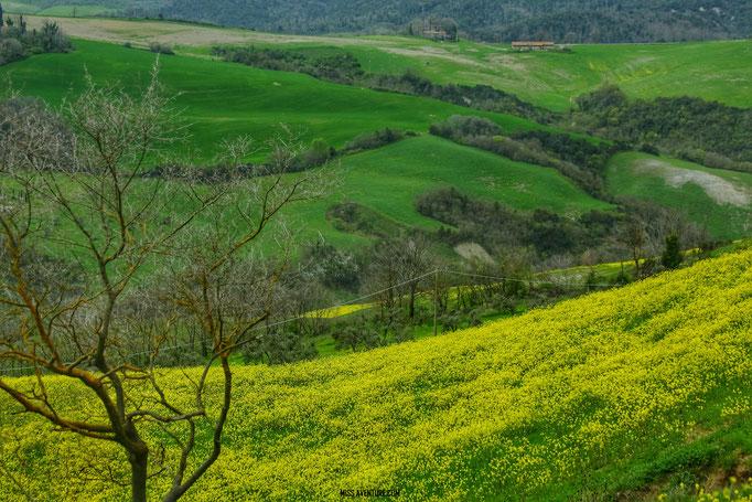 Les nuances de vert en Toscane.
