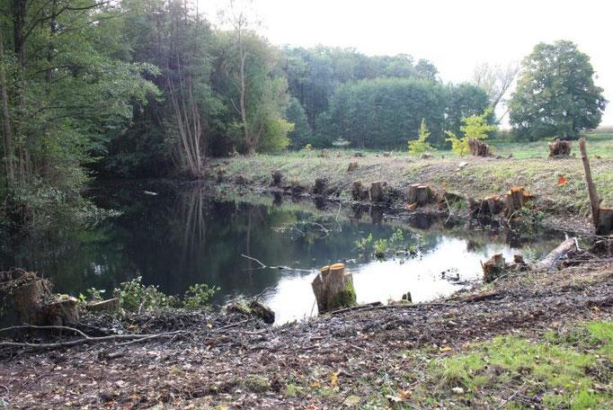 Nochmals der freigelegte Teich  Foto:NABU/Peter Jacobson