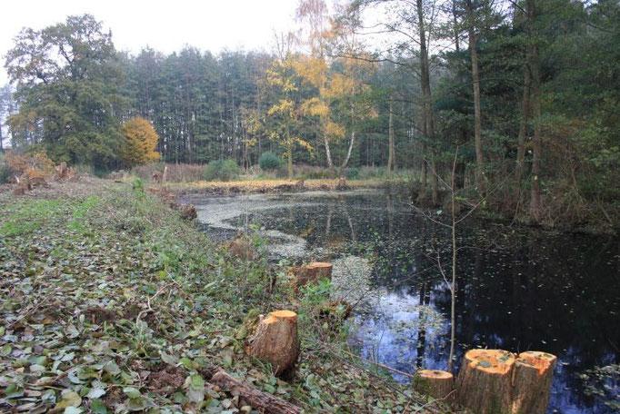 Blick auf den freigelegten großen Teich  Foto:NABU/Peter Jacobson
