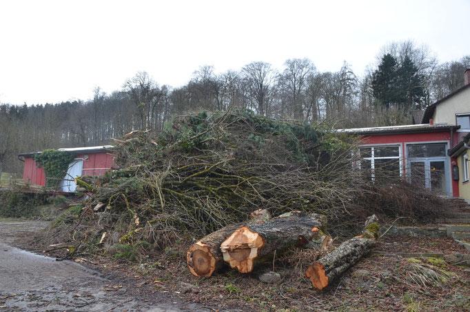 Baumfällung Wangerer Straße  vor der Abzweigung nach Kemmerlang