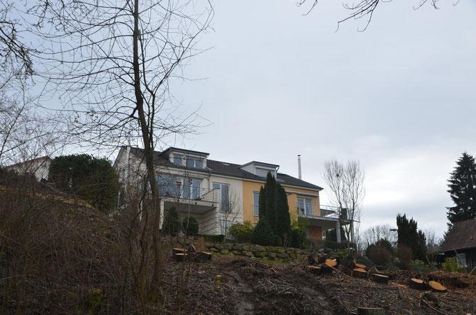 Baumfällung Banegg Süd