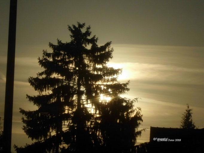 Goldner Himmel/Aufnahme Garten