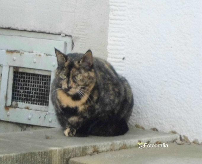 Aufnahme unterwegs/Extra/Katzen