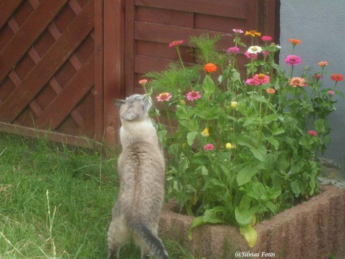 Katze an Blumen/Aufnahme unterwegs