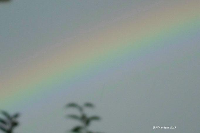 Regenbogen/Aufnahme 2014