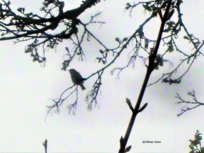 Vogel /Aufnahme unterwegs