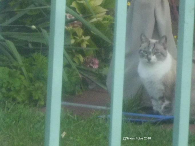 Katze im Garten/Aufnahme unterwegs