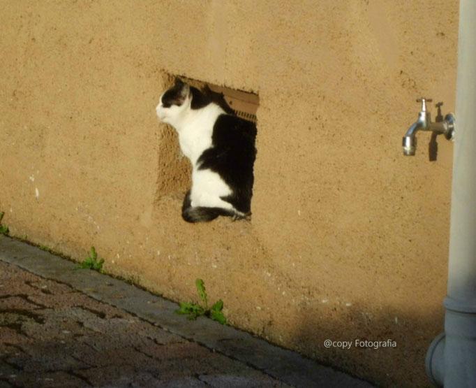 Tiere/Katze/Aufnahme unterwegs