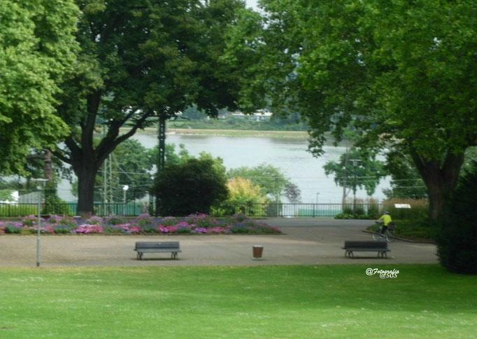 Blick vom Stadtpark auf den Rhein 1