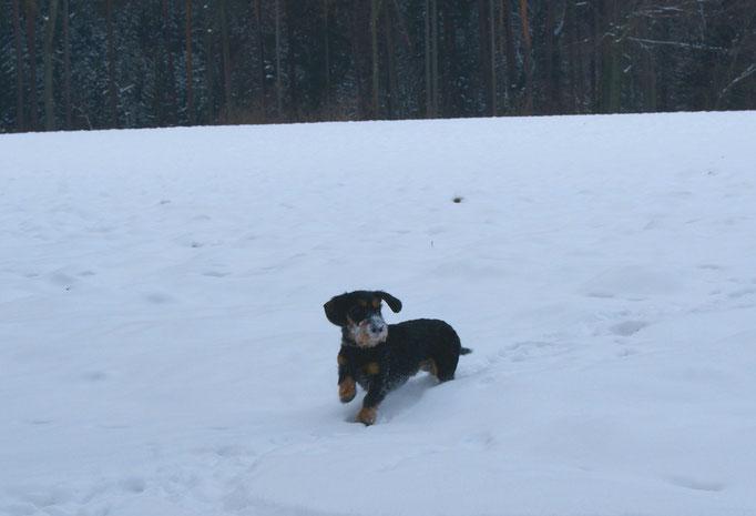 auch Gustl hat Spaß im Schnee