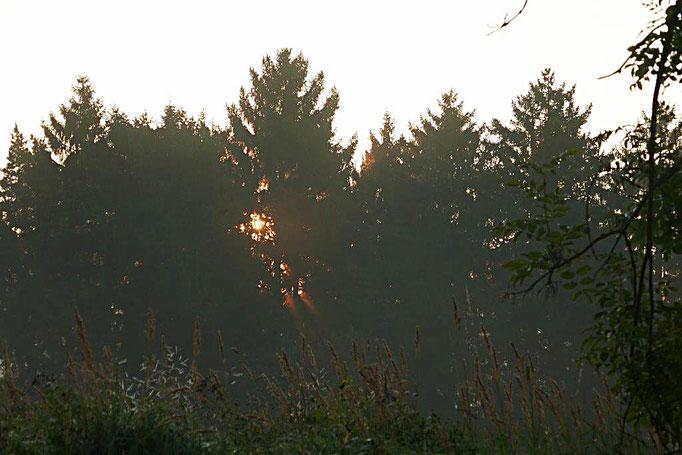 Morgenstimmung am grünen Band
