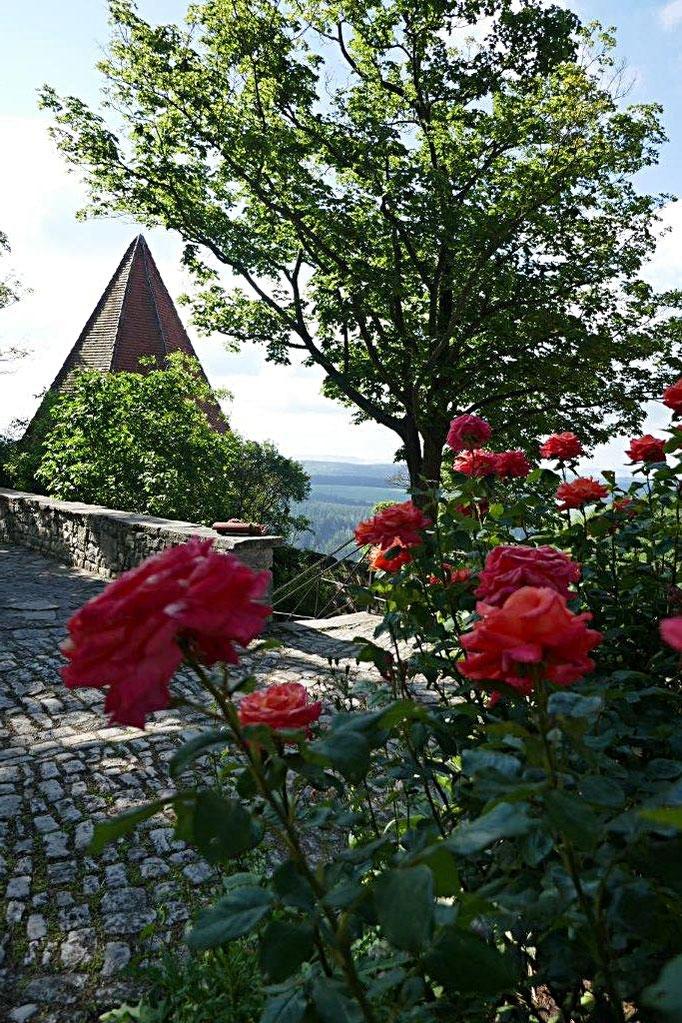 Rosen im Burghof