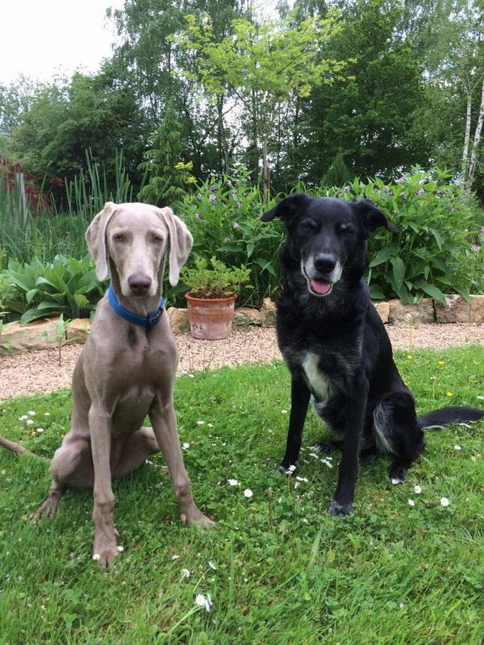 Faya und Luke (jung und alt)