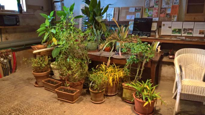 Alle Topfpflanzen rein ins Atelier